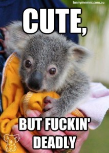 koala-australia-meme