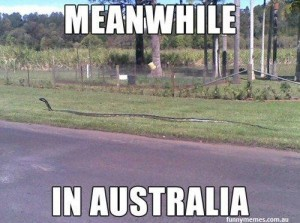 meanwhile-in-australia-new-meme