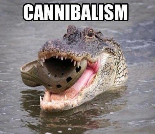 Crocodile eating Crocs shoes Meme